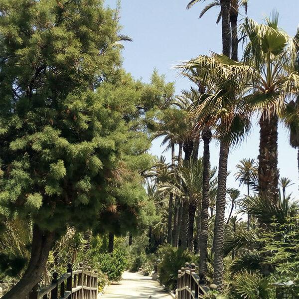 Palm park Alicante
